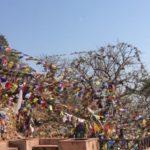 Inde : nouvelles du 19 février